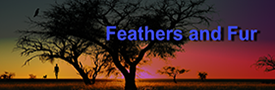 Feathers and Fur story front cover