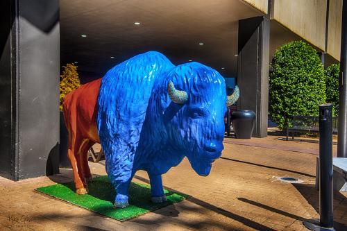 Blue-bison-12x