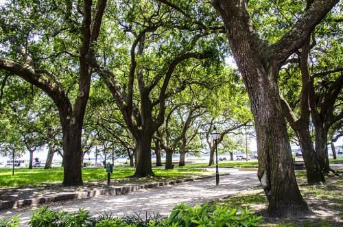 Charleston-park-12x