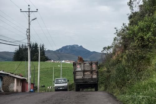 Horse cart on way to Antisana
