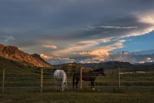 Horses Livermore 2