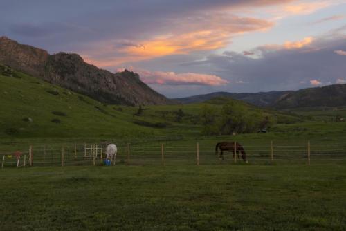 Livermore CO horses 14