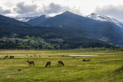 Rocky-Mountain-National-Park-with-deer-18x12