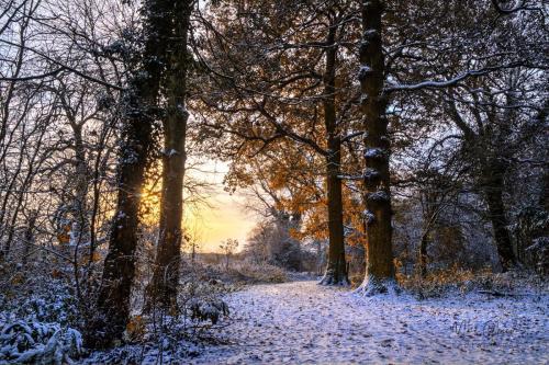 Sunrise-woodland-walk-with-snow-mgp
