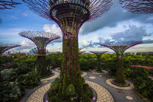 The-Gardens-on-the-Bay-Singapore-3-12x8