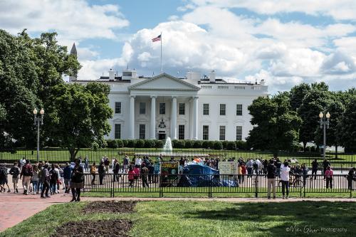 The White House mgp 12