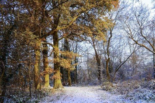 Woodland-path-with-snow-mgp