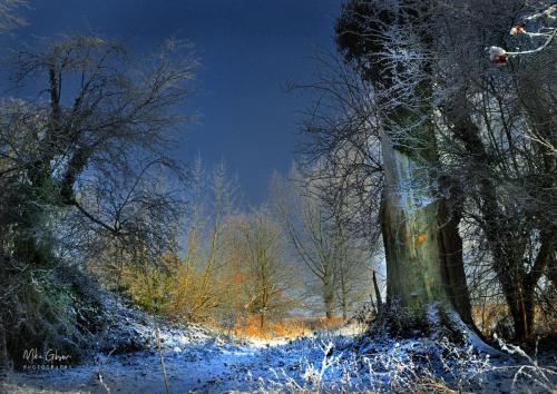 Woodland-snow-HDR