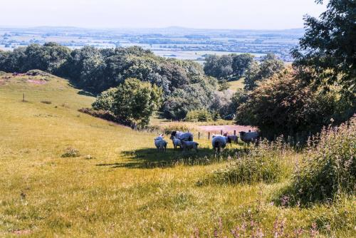 northamptonshire-fields-12x18